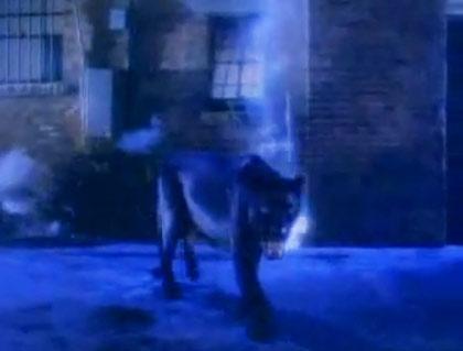 Michael Jackson Panther